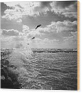 Gulls In A Gale Wood Print