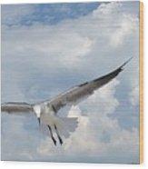 Gulls In Flight Wood Print