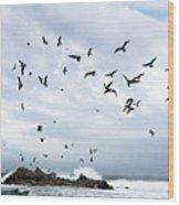 Gulls Of Carmel Wood Print