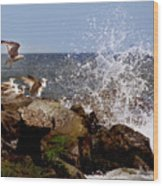 Gulls Of The Jersey Shore Wood Print