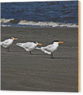 Gulls On Beach Wood Print