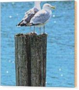 Gulls On Piling Wood Print
