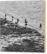 Gulls On The Shore Wood Print