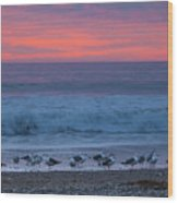 Gulls With Pink Sky Wood Print