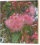 Gum Blossom Wood Print