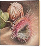 Gumnut And Flower Wood Print