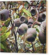 Gumnut Grouping Wood Print