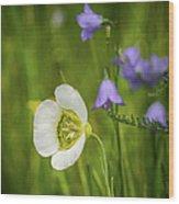 Gunnison's Mariposa Lily Wood Print