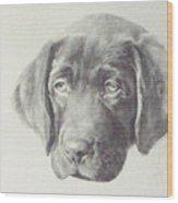 Gus - Chocolate Lab Pup Wood Print