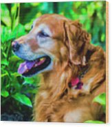 Gus In Flower Bed 10357t2a Wood Print