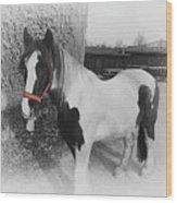 Gypsy Horse Wood Print