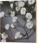 Gypsophila Wood Print