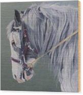 Gypsy Cob Mare-milltown Fair Wood Print