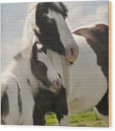Gypsy Mare And Foal Wood Print