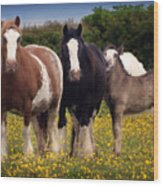 Gypsy Mares And Foal Wood Print