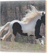 Gypsy Stallion Esperanzo Wood Print by Terry Kirkland Cook