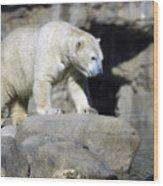 Habitat - Memphis Zoo Wood Print