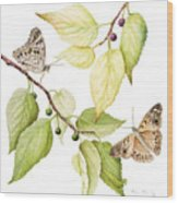 Hackberry Emperor Butterfly Wood Print