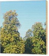 Haddington Pan Wood Print
