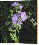 Hairy Phacella Wildflowe Wood Print