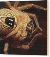 Hairy Spider Wood Print