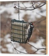 Hairy Woodpecker 2 Wood Print