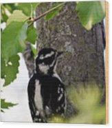 Downy Woodpecker 01 Wood Print