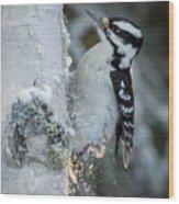Hairy Woodpecker Female Wood Print