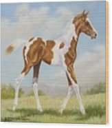 Half Arabian Pinto Filly Wood Print by Dorothy Coatsworth