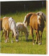Halflinger Horses Wood Print