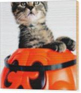 Halloween Kitten Wood Print