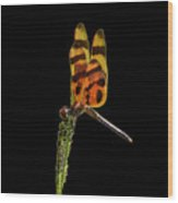 Halloween Pennant Dragonfly .png Wood Print