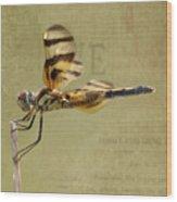 Halloween Pennant Dragonfly Wood Print