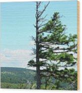 Halved Pine Wood Print