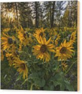 Hamblen Park Sunshine Wood Print