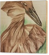 Hamerkop Wood Print