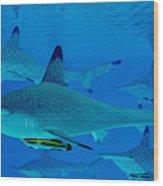 Hammerhead Sharks Wood Print