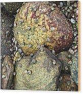 Hammonasset Rocks Wood Print