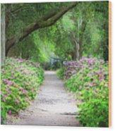 Hampton Park Path Wood Print