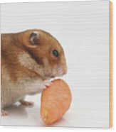Hamster Eating A Carrot  Wood Print