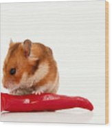 Hamster Eating A Red Hot Pepper Wood Print