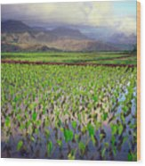 Hanalei Valley Taro Ponds Wood Print