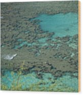 Hanauma Bay Reef And Snorkelers Wood Print