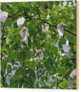 Handkerchief Tree Wood Print