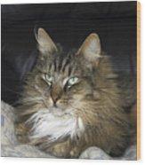 Handsome Cat Wood Print