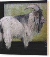 Handsome Pygmy Goat Wood Print