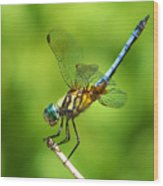 Handstand Dragonfly Wood Print by Karen Scovill