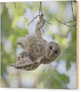 Hang In There Wood Print