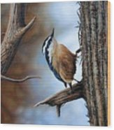 Hangin Out - Nuthatch Wood Print