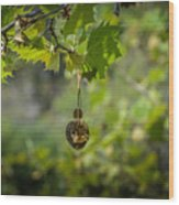 Hanging Around Wood Print